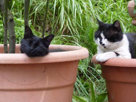 Unsere italienischen Katzen Minni und Leo