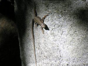 04_1_die-mauereidechsen-sind-die-haeufigsten-reptilien-des-grundstueckes-sie-zeigen-sich-auch-an-warmen-sonnigen-wintertagen