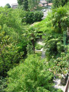 06_1_die-grossen-palmen-wurden-einst-gepflanzt-die-kleinen-stammen-aus-der-naturverjuengung