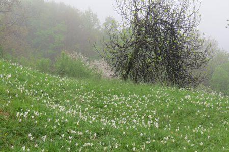 Von poetischen Narzissen und Orchideen