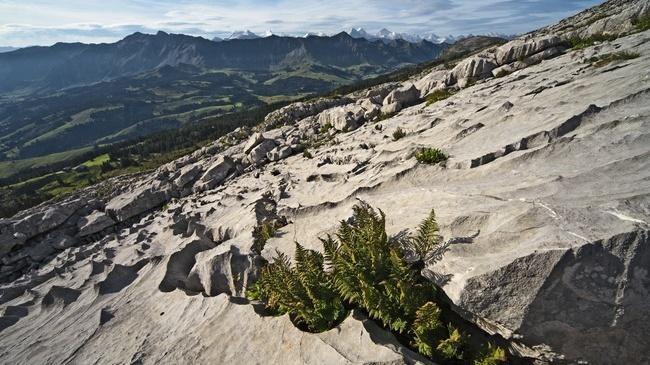 Ein paar Gedanken zur Wildnis in der Schweiz