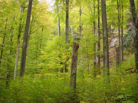 WSL-Urwaldforschung in Transkarpatien
