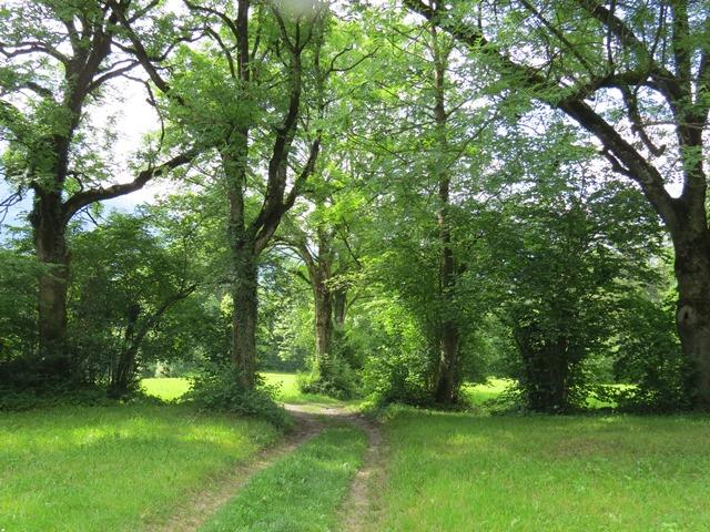 Orts- und Flurnamen mit Bezug zur Natur