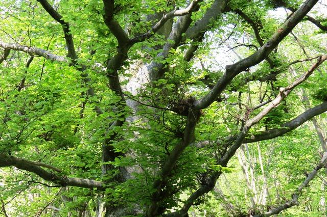 Ist die Forstwirtschaft noch nachhaltig?