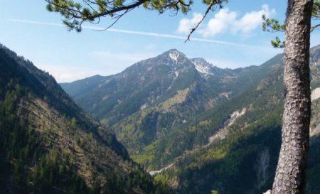 Höchste Zeit für Wildnisgebiete in Mitteleuropa