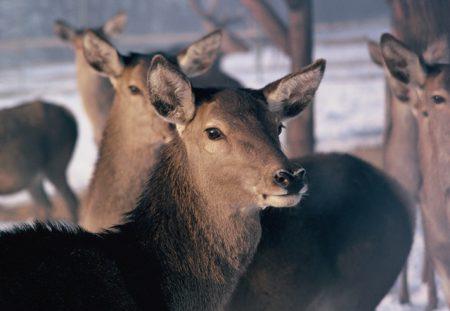 Wald und Wild – die unendliche Geschichte