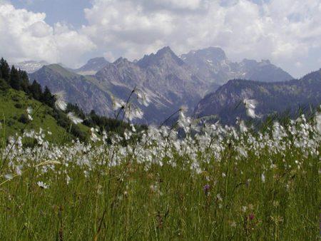 Von der Insel zur Fläche – und vom Biotop- zum Landschaftsinventar
