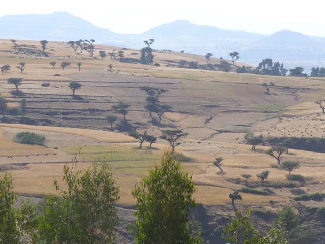 Äthiopien mit Besuch des Tanasee, Gonder und Semien-Nationalpark