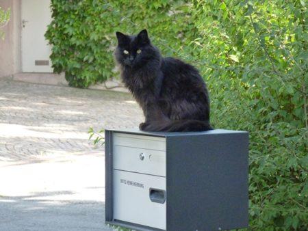 Katzen erkennen den eigenen Namen und andere späte Erkenntnisse der Wissenschaft