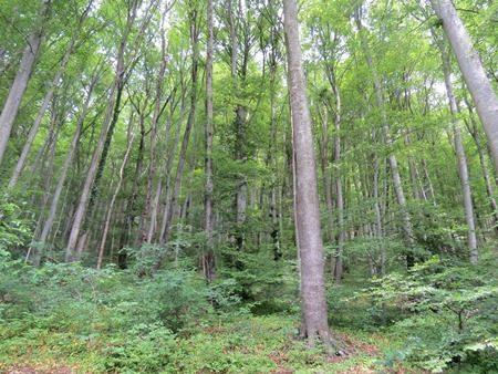 Wild-Wald: Das Wild als Sündenbock