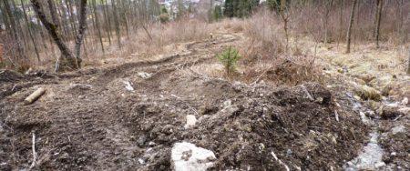 Leserbrief: Fragwürdige Massnahmen und Abkehr vom naturnahen Waldbau