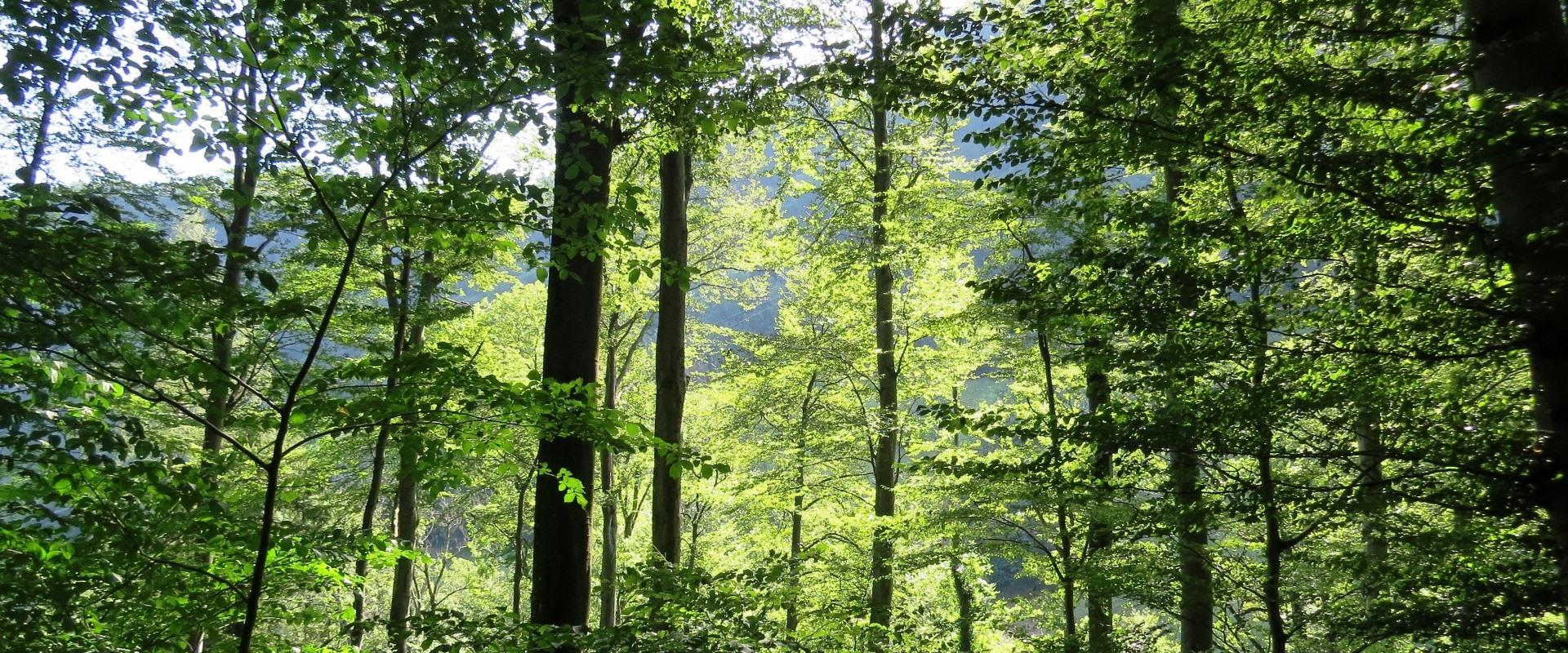 Warum unsere Wälder nicht ausreichend naturnah sind!