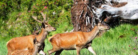 Zur Abänderung des liechtensteinischen Jagdgesetzes
