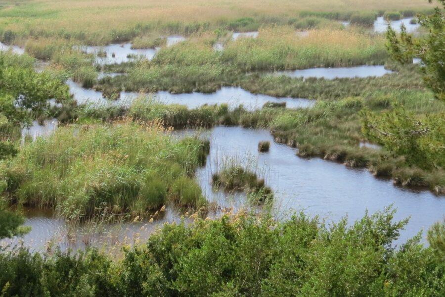 Das Potenzial der Moorböden klug nutzen