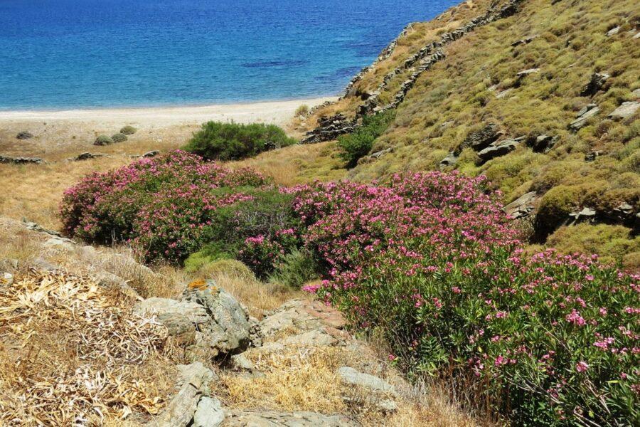 Die 47. Mediterranfahrt 2021 nach Kythnos (Kykladen – Griechenland)
