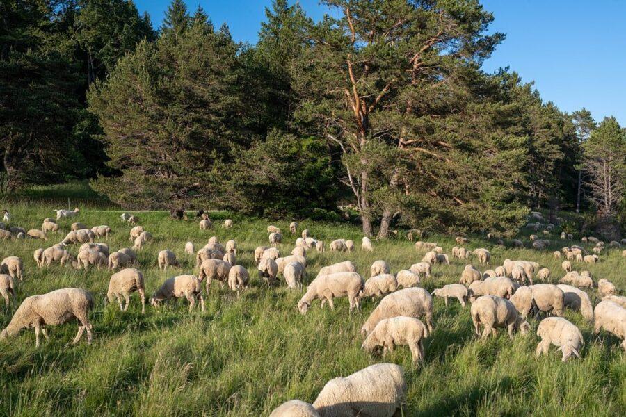 Lasst uns über Schafe UND Wölfe reden!